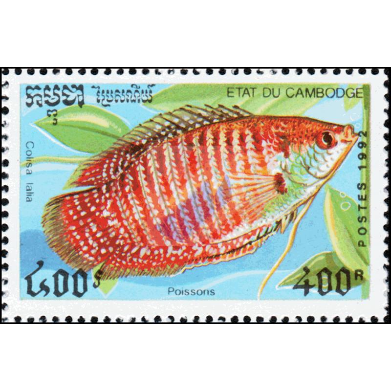 Ornamental fish 188 5 09 for Ornamental fish