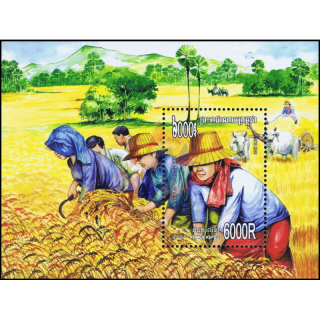 Rice Cultivation (322)
